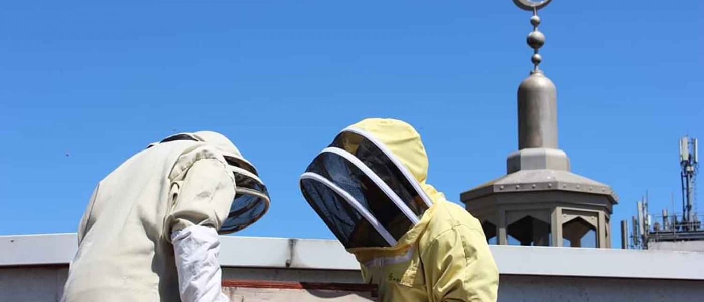 Bushwood Bees: Rooftop beekeeping on the East London Mosque